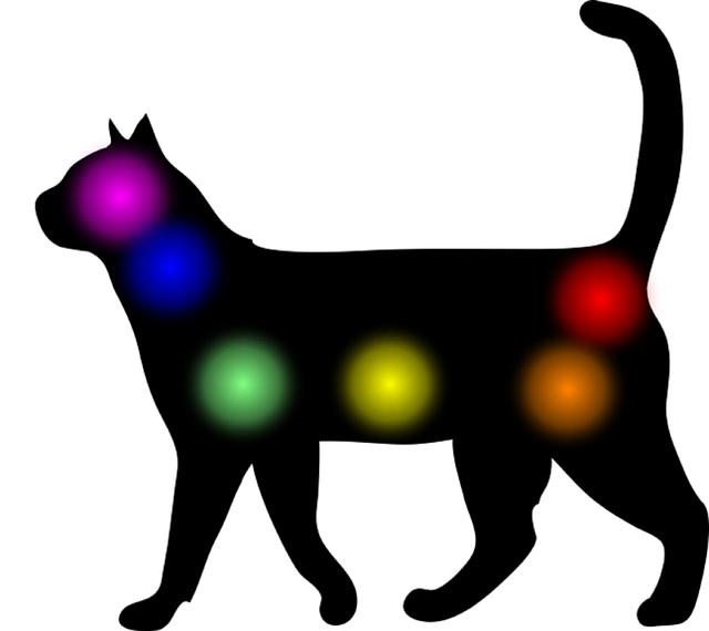 Animal Reiki - Cats